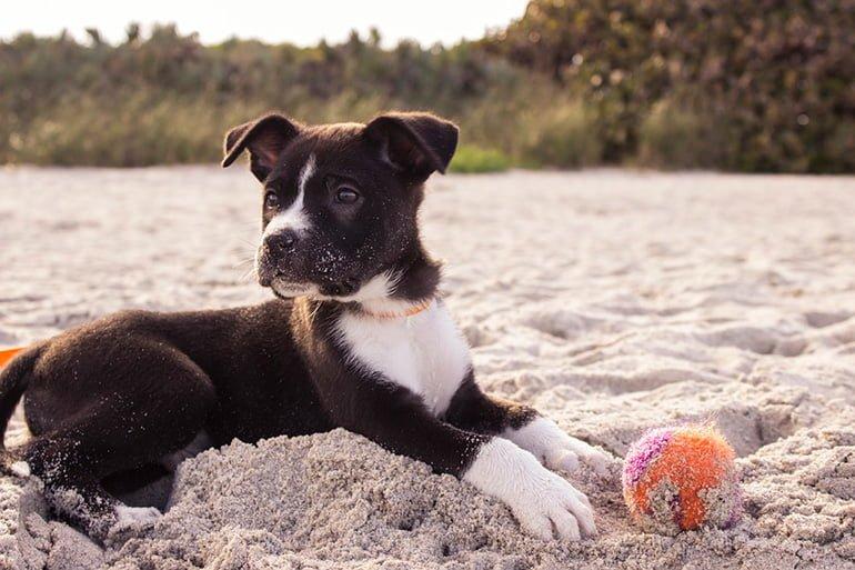 cachorro-jugando-en-la-playa