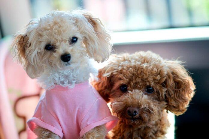 deux chiennes