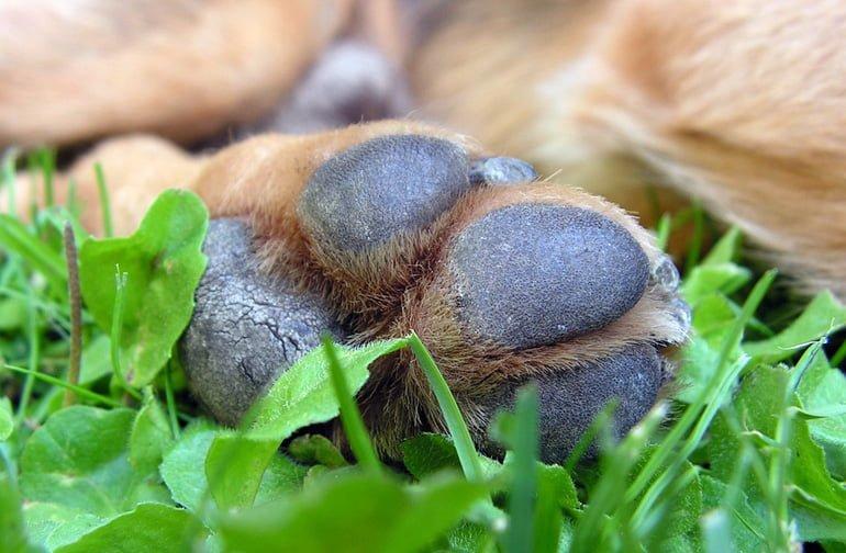 patas-de-perro-agrietadas