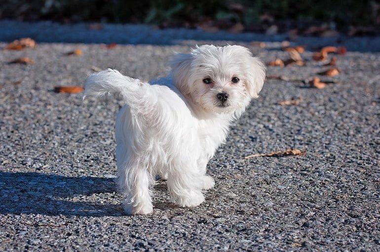 Noms pour petits chiens