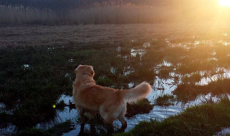 perro-caminando-en-zonas-fangosas