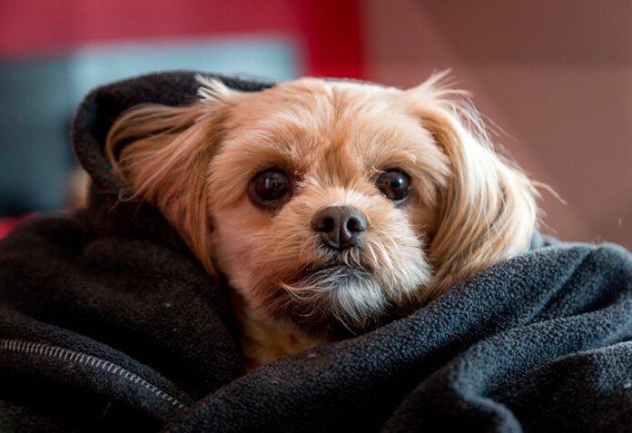 perro-con-úlcera-estomacal