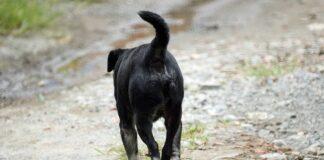 perro-con-extreñimiento-cronico