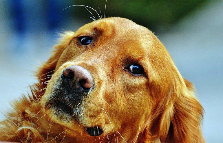perro-con-la-mirada-triste