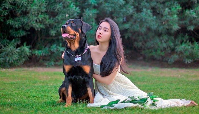 perro con la novia