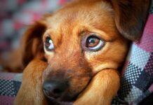 perro con miedo