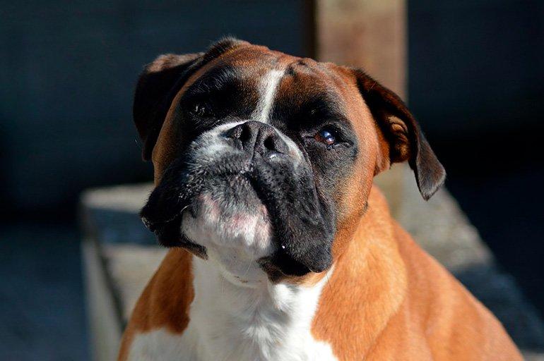 perro-con-obstrucción-vesicular
