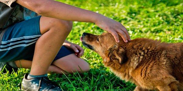 perro con su dueno