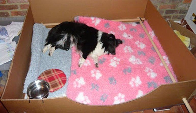 perro-durmiendo-en-cama-de-carton