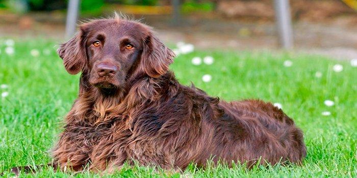 perro en el jardin