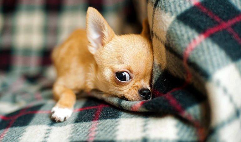perro-en-el-sofá