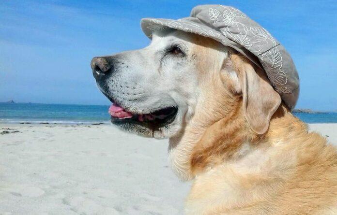 perro-en-la-playa