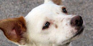 perro-mestizo-de-tamaño-medio