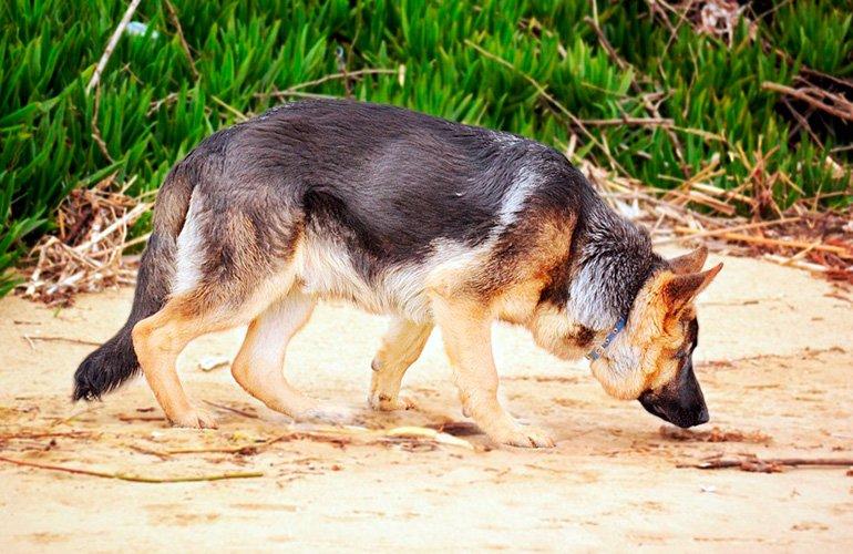 perro-olfateando-restos-de-otro-perro