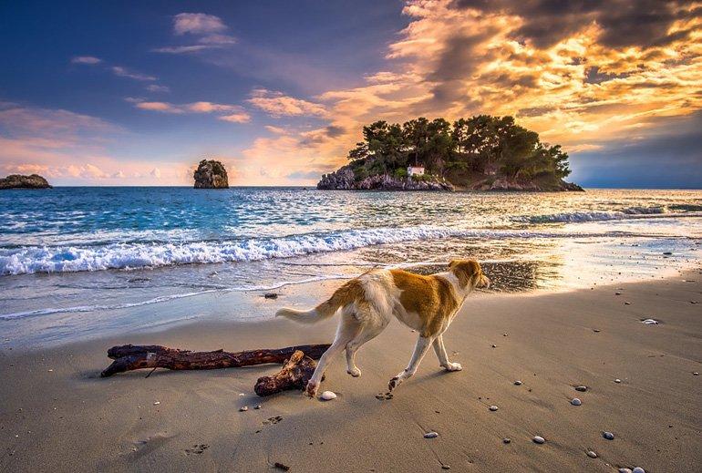 perro-paseando-por-la-orilla-de-la-playa