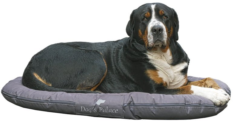perro-sobre-cama-circular-de-tela-lavable