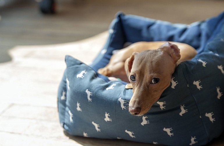 perro-sobre-cama-tipo-cuna