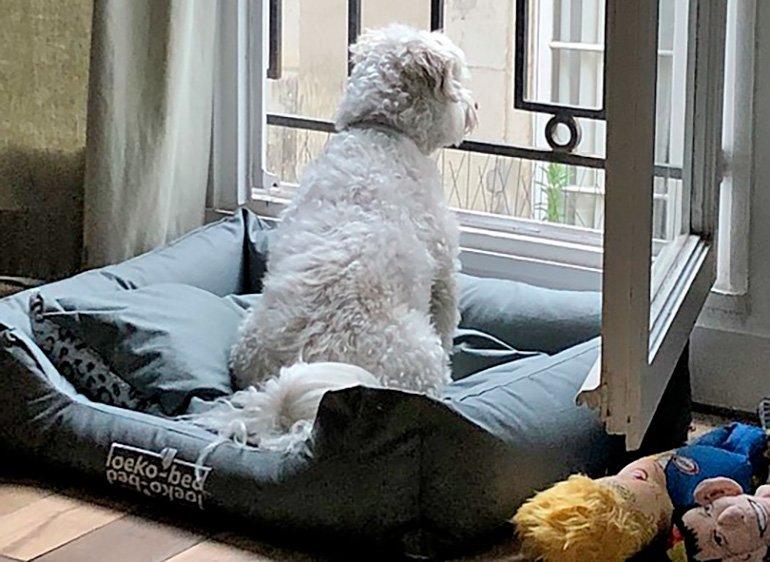 perro-solo-en-casa-esperando-a-su-dueño