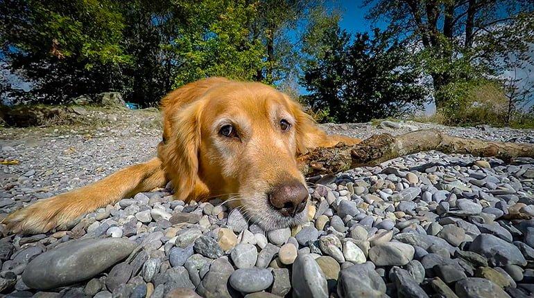 perro-tumbado-tomando-el-sol