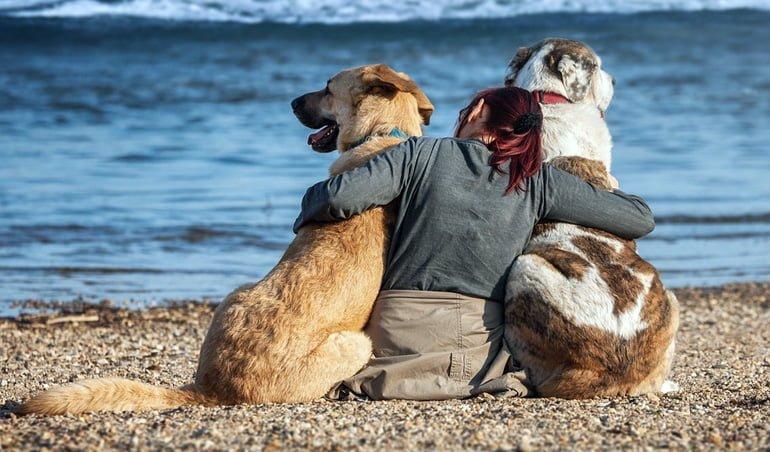 perros-con-su-dueña-en-la-playa