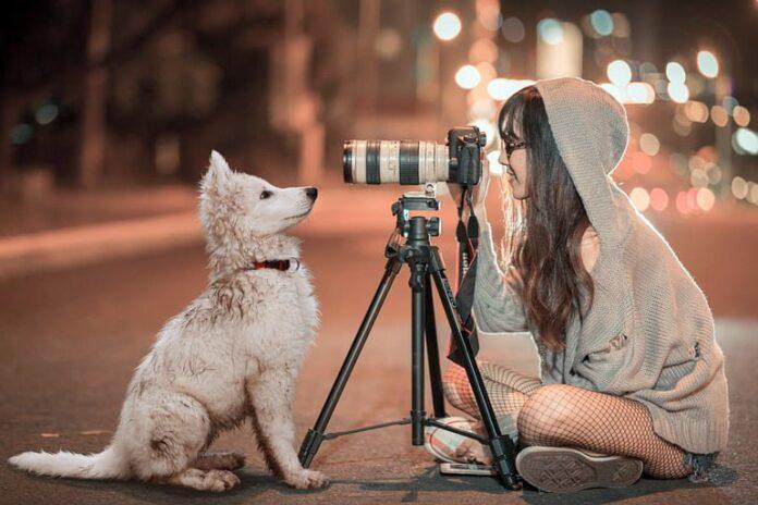 perros-en-video