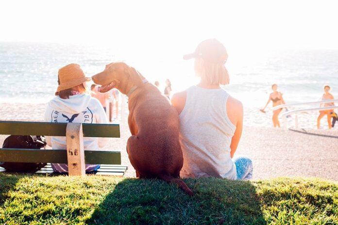 una-día-de-playa-con-nuestro-perro