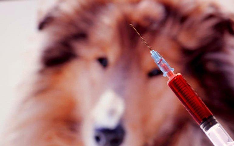 vacuna-perro