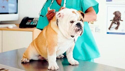 perro recibiendo tratamiento