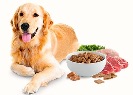 perro tumbado con comida