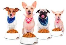 Perros comiendo alimento comercial