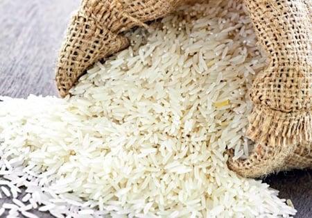 Mon chien peut-il manger du riz?