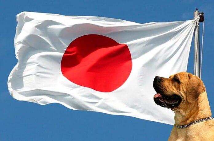 bandera-de-japon-con-perro