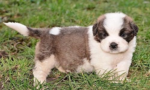 Cachorro de dos meses