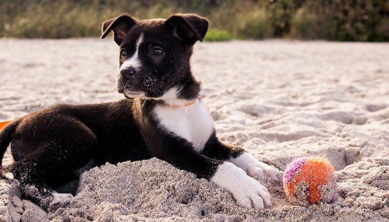 cachorro-que-ha-comido-arena