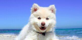cachorro-tomando-el-sol-en-la-playa