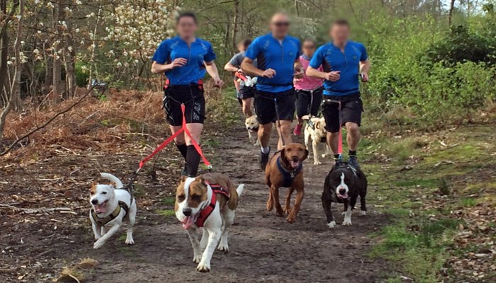 canicross deporte perros