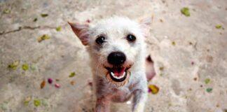 perro adoptado pelon