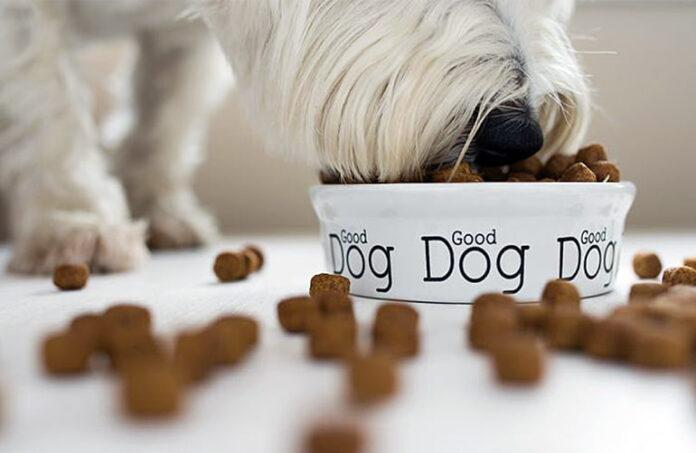 perro-comiendo-su-comida