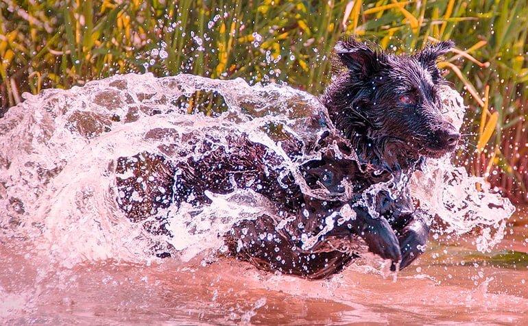 perro-disfrutando-de-un-baño-en-el-lago