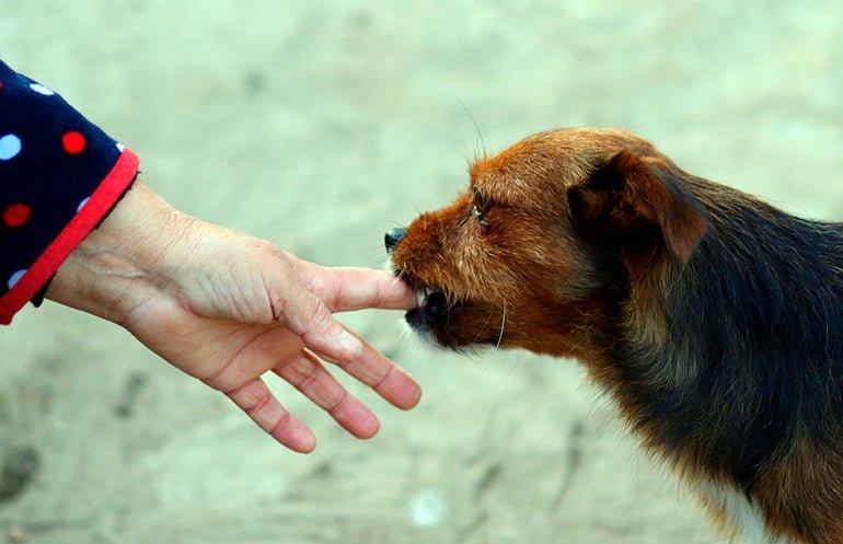 perro-mordiendo-mano