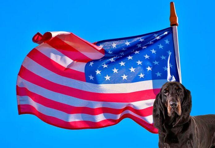 perros-americanos