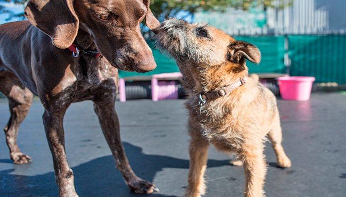 perros conociendose