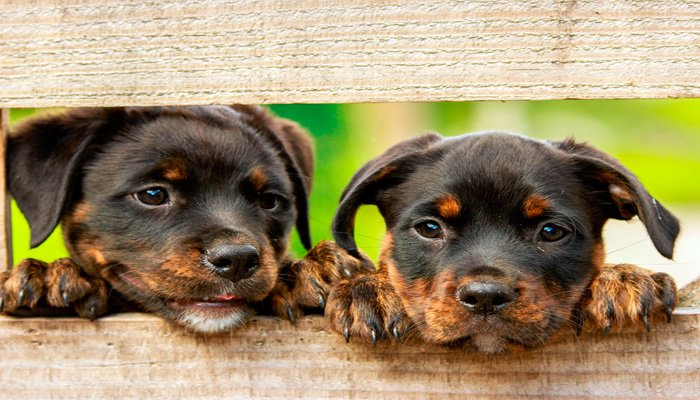 perros en protectora