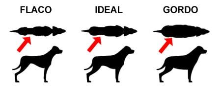 perro gordo o flaco