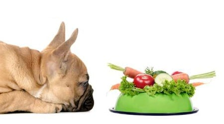 perro a dieta