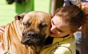abrazo a perro con orejas hacia atrás
