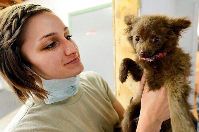 cachorro-de-perro-en-revisión-veterinaria