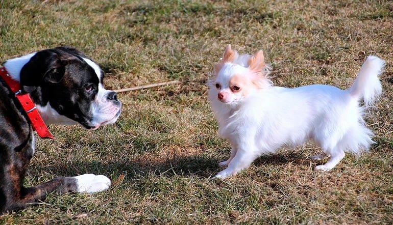 perro-asimilando-la-llegada-de-un-nuevo-perro