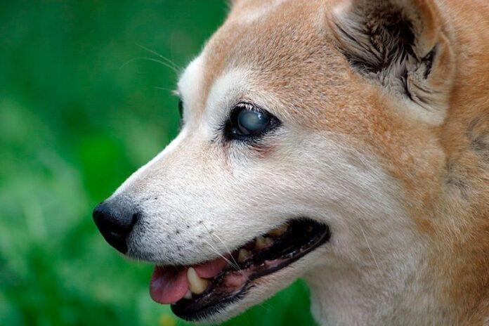 perro-ciego