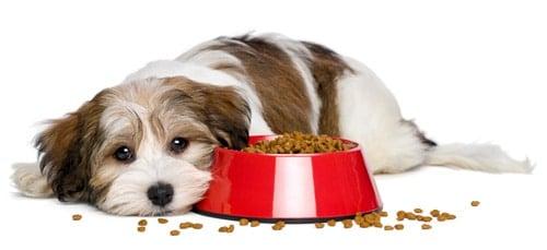 perro con pienso comercial